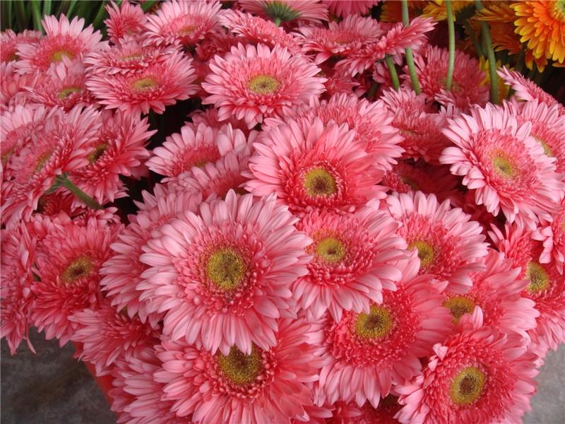 清流鲜切花