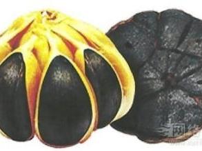 中牟大白蒜(1)