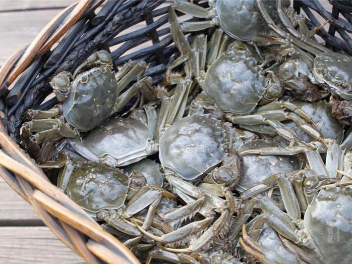 茅山螃蟹(茅蟹)1