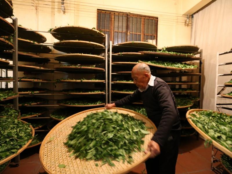 武夷岩茶工艺流程 做青