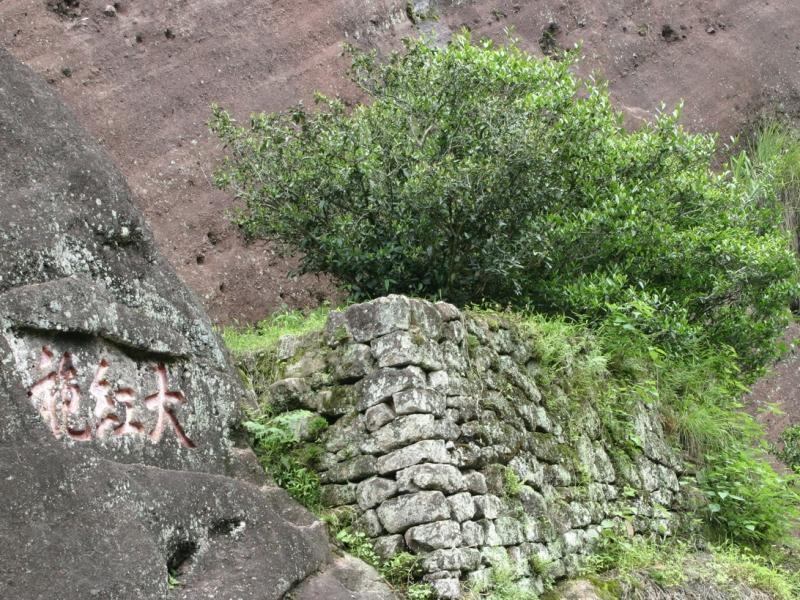 武夷岩茶母树大红袍