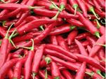 开鲁红干椒