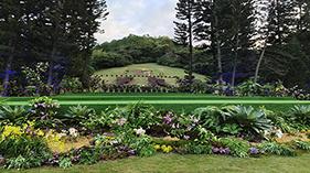 仙湖植物园封面