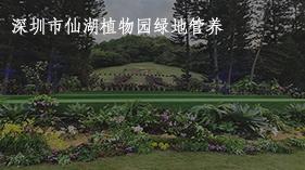 仙湖植物园封面2