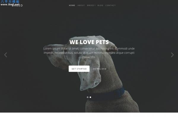 免费源码浅灰色白色动物网站模板