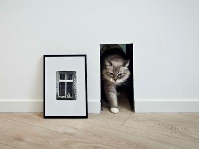 cat-door-1