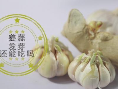 姜蒜发芽还能吃吗?