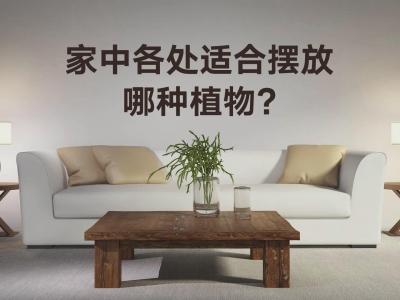 家中各处适合摆放哪种植物?1