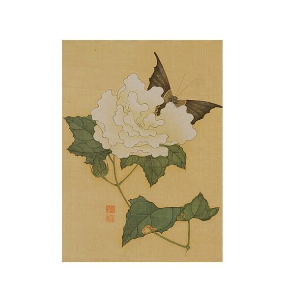 花与蝴蝶00