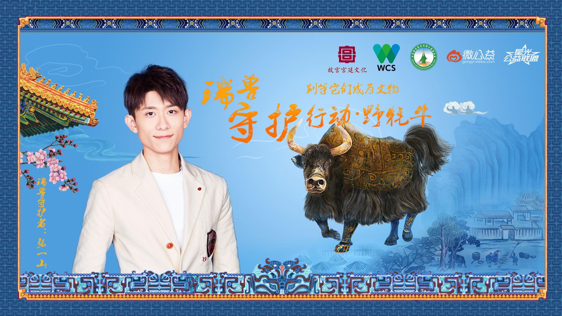 张一山,牦牛,保护野生动物