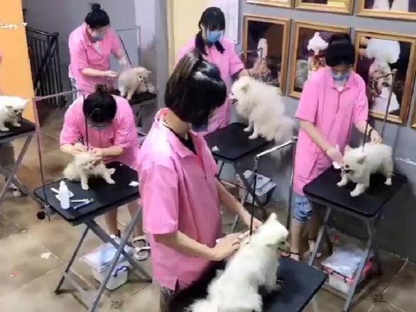开宠物店加盟