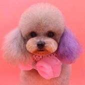 台州宠物美容培训学校