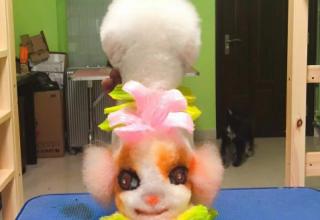 哈利吖吖宠物美容学校www.yayapet.cn