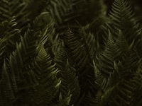 green pine tree in close up photography 绿松树近景摄影