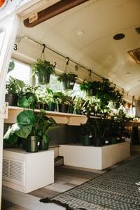 green plants on white wooden table 白色木桌上的绿色植物