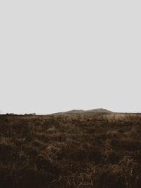brown grass field under white sky during daytime 白天下褐草田