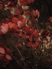 red flower in macro shot 宏射红花