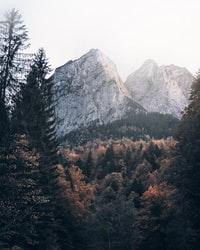 green trees near gray mountain during daytime 白天靠近灰山的绿树