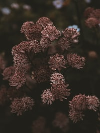 red and brown flowers in tilt shift lens 斜移镜头中的红褐色花