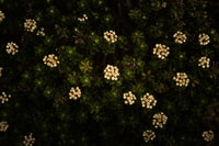 white and yellow flowers with green leaves 白花和黄花,绿叶