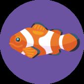 sea animal 海洋动物