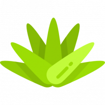 Download Agave for free 免费下载