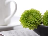 chrysanthemum_buds_green_plate_newspaper_glass_35143_3840x2160