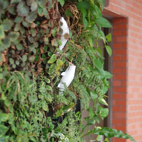 可持续园林研究·垂直绿化