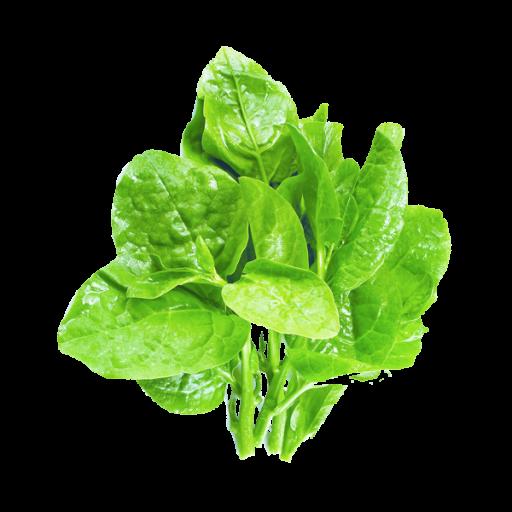富含维生素B1、维生素E,还有大量膳食纤维素和微量元素。